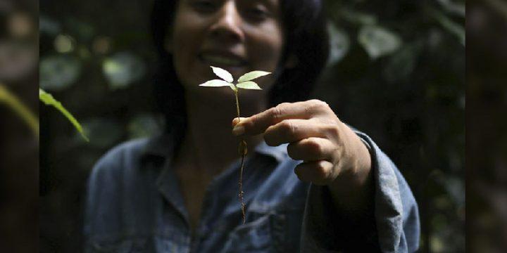 Marianela Laura Quisbert <br> Ex-becaria Universidade Federal do Pará <br> Tutora
